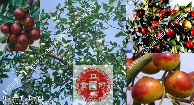 山东大枣 家乡自产 正宗圆铃特级大红枣 纯天然 多图图片
