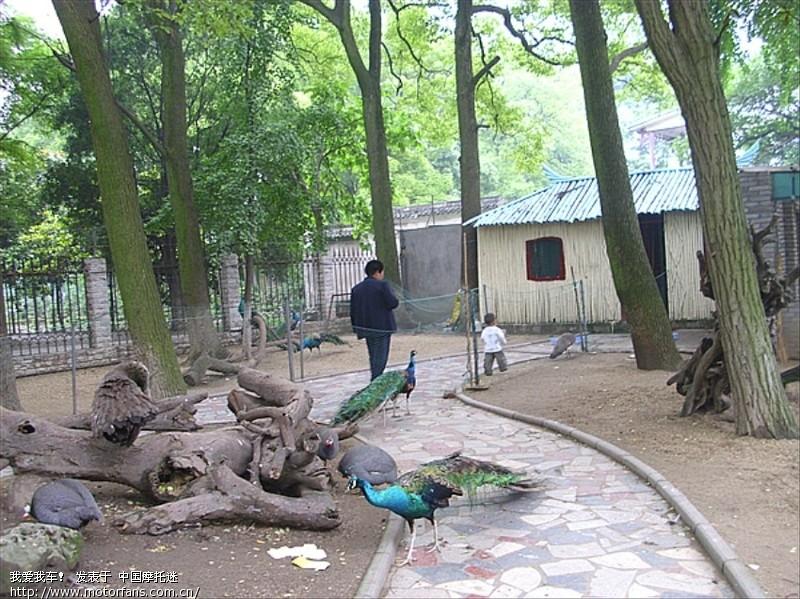 标题: 六一节陪儿子参观荆州博物馆和动物园.大量图片,值得一看!