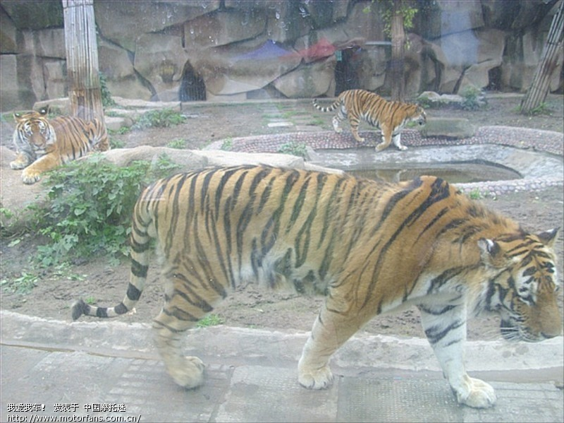 六一节陪儿子参观荆州博物馆和动物园