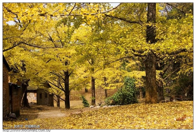 壁纸 风景 森林 桌面 770_520