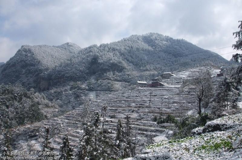 骑行綦江县石壕镇万隆山看雪山,雪松