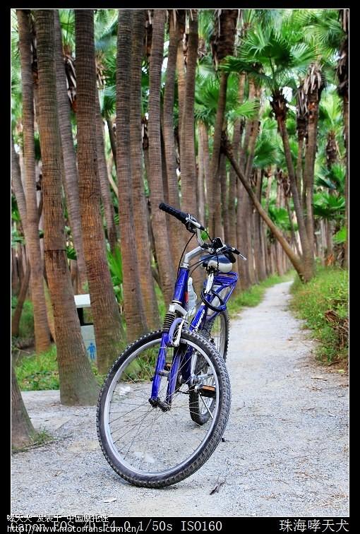 骑行新会南坦岛葵林绿道(超美图片)
