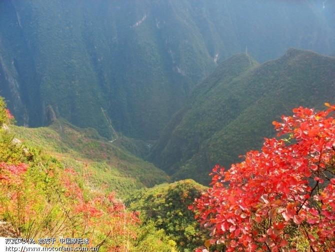 2,这里的红叶树由于树心是黄色的,被当地人称之为黄纳子树,由于