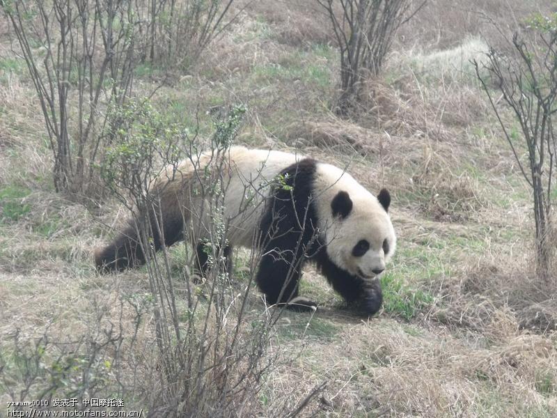 周日带儿子逛西安秦岭野生动物园 - 陕西摩友交流区