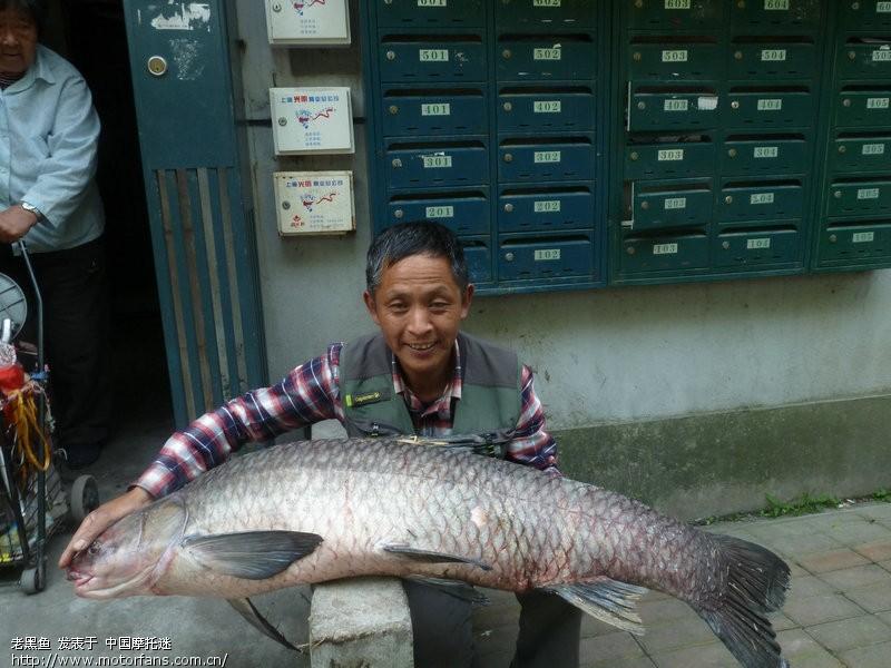 今天钓起47斤大乌青-渔友美女-摩托车之家-论坛偷视频图片