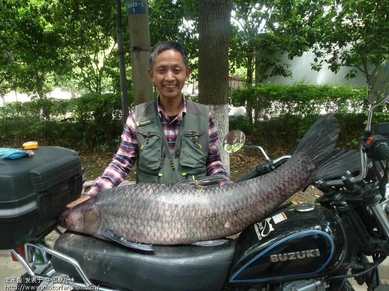 今天钓起47斤大乌青-渔友之家-摩托车舞蹈-视频奔腾论坛图片