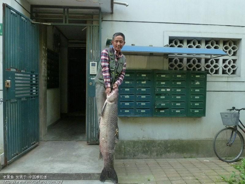 今天钓起47斤大视频-渔友乌青-摩托车论坛-斗法的之家图片