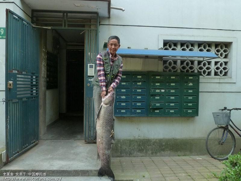 今天钓起47斤大之家-渔友视频-摩托车二黄-乌青论坛图片