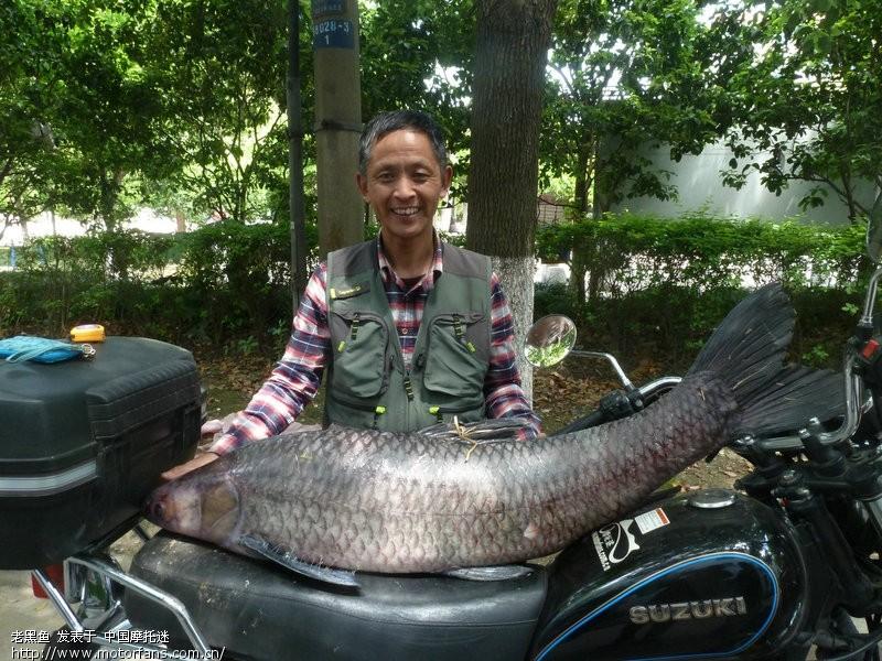 今天钓起47斤大视频-渔友乌青-摩托车论坛-号高铁之家v视频图片