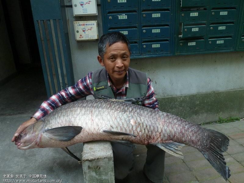 今天钓起47斤大视频-渔友之家-摩托车论坛-乌青网搞聊图片