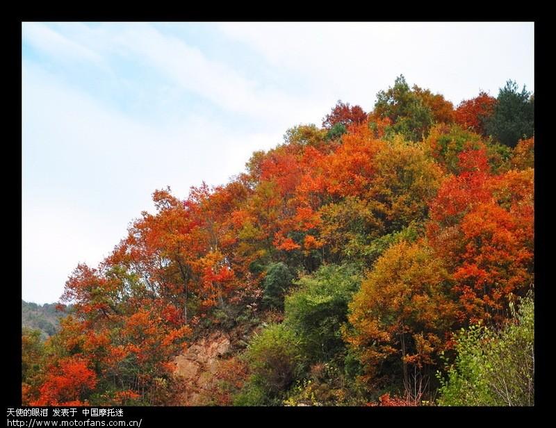 霜叶红于二月花---江油枫顺红叶 - 四川摩友交流区