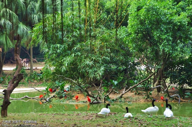 长隆野生动物园 - 摄影论坛