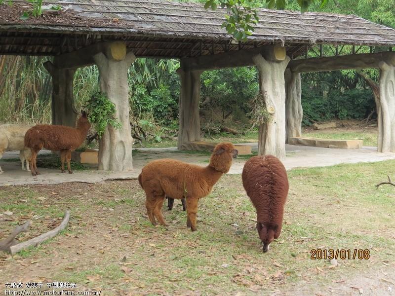 > 广州长隆野生动物园
