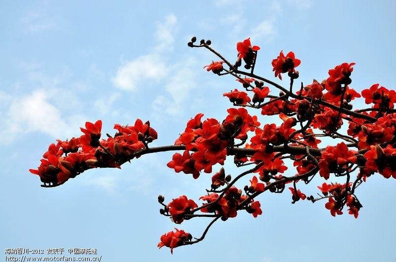 2月15日(初六)昌江看木棉花