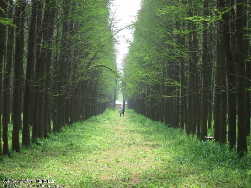 """摩旅江苏兴化""""千岛菜花风景区""""和""""水上森林公园"""""""