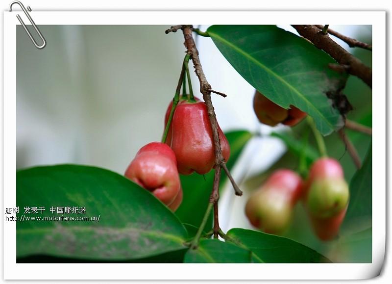 云南 贵州/_MG_9065.jpg