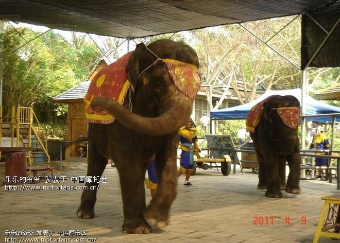 03 大青山野生动物园一游