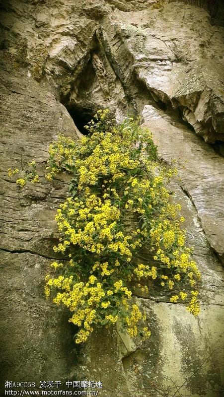 藤罗密布,古树参天,山泉飞泻,鸟语花香,保持着极其原始的自然景观.