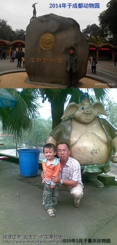 合川——杨家坪动物园