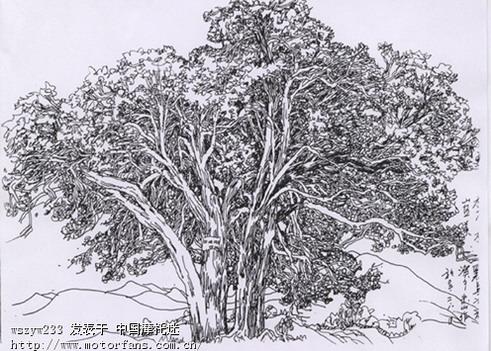 手绘素描龙仙