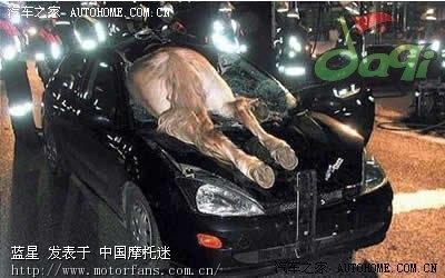 木摩托车专区 世界九大最离奇的车祸图片