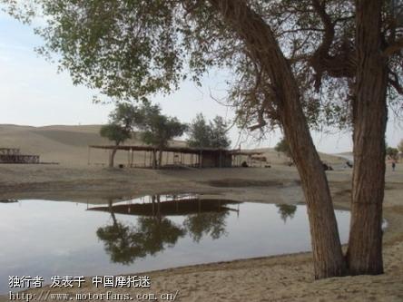 新疆 风光胡杨林