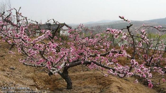 春光明媚桃花香——钢城桃花岛之行 - 山东摩友交流区