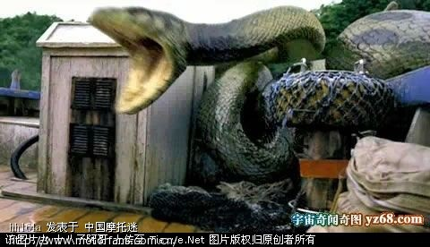 辽宁挖出140岁蛇精 16米长 挖掘工人死亡 有图